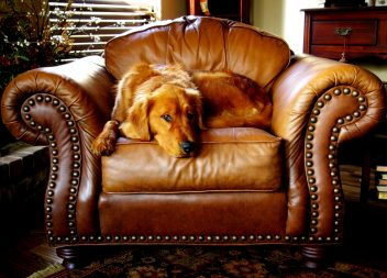 Особенности выбора и отличия кожаной мебели