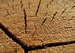 трещины в брусе и их количество